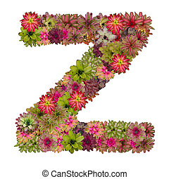 letter Z made from bromeliad flowers isolated on white...