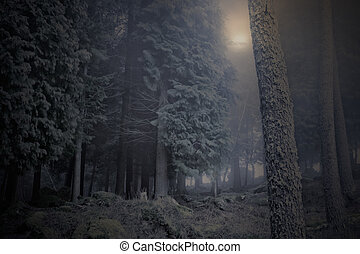Moon over a foggy woods - Arising moon over a foggy woods at...