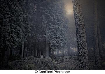 Moon over a foggy woods