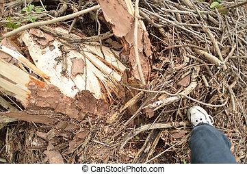 EF0 Tornado Damage in North Florida