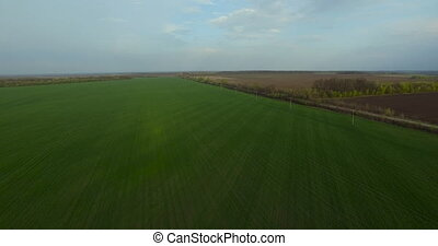Spring green field of agriculture aerial view