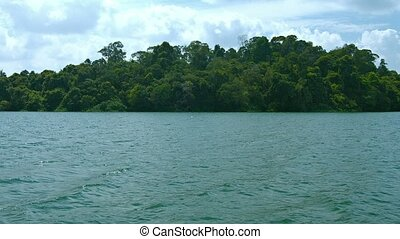 """Dense, Tropical Rainforest Foliage at Water's Edge. FullHD..."
