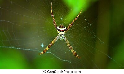 """Big, Colorful Spider on her Web. Video 1920x1080"" - ""Large..."