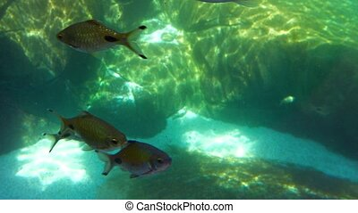 """Many Little, Tropical Fish in a Popular Public Aquarium...."