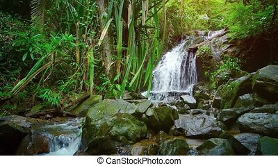 Tropical Waterfall in a Southeast Asian Rainforest...