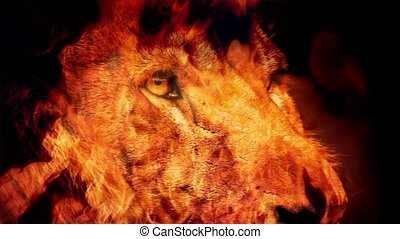Powerful Lion Face In Fire Abstract - Closeup of large male...