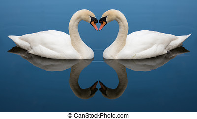 Swan Love heart - Two Swans form a love heart shape with...
