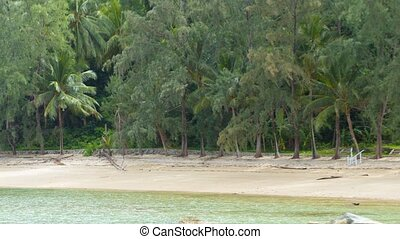 Treeline along a Tropical Beach Paradise Video 1920x1080 -...