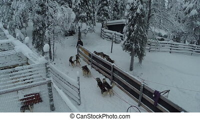 Riding at dog sledge in winter woods, aerial view - Aerial...