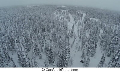 Endless expanse of winter pinery, aerial view - Aerial shot...