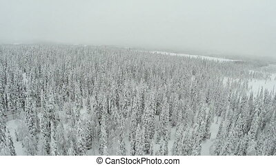 Winter Forest With Frosty Trees From Air - Aerial view of...