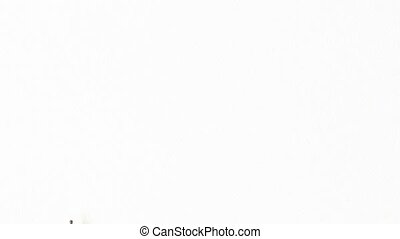 Snail crossing white background from bottom to top. - Snail...