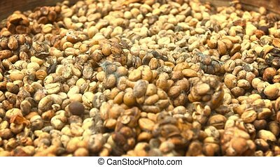Coffee beans, collected from stool of civets for production...