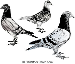 pigeons trio - sketching of the pigeons