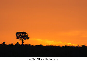 African Sunrise - A beautiful golden orange sunrise in...
