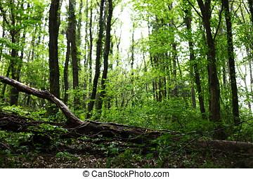 forest, background image - daylight photographed woodland,...