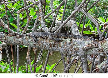 Komodo dragon (Varanus komodoensis). Wild life animal.