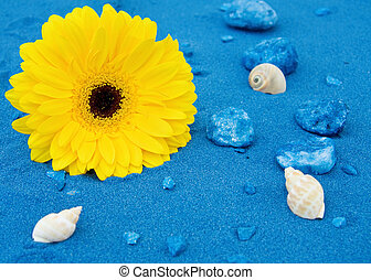 Yellow daisy and blue sands