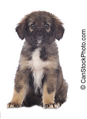 Cute mixed breed puppy sits - Cute mixed breed puppy...