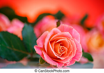 bouquet of pink roses on a red background