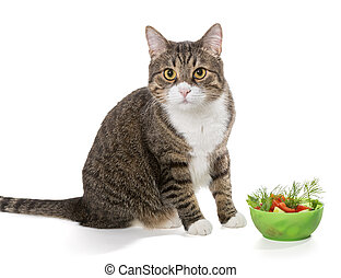 Fat grey cat and salad, isolated on white