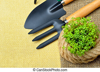 Cress sprouts with gardening tools. - Cress sprouts with...