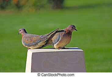 two birds - Two birds are sitting on a rock against a...