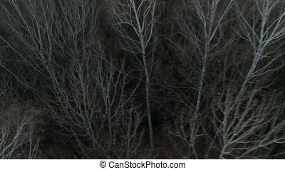Autumn forest aereal shot. - Forest with leafless trees...