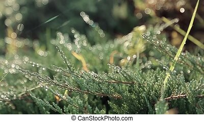 Background with young green grass. Early morning and the dew...