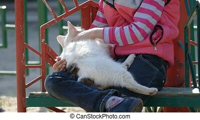 girl teen playground stroking cat on outdoors - girl teen...