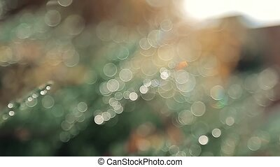 Abstract background of the grass with dew drops in the morning, with bright sun