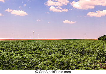 Group Of Wind Turbines In Calarasi