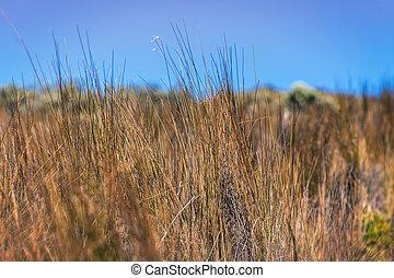 Meadow With Green Grass - Meadow With Green Grass In...