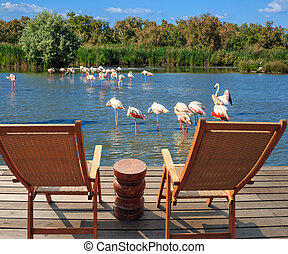 Comfortable lounge chairs for birdwatching - Comfortable...