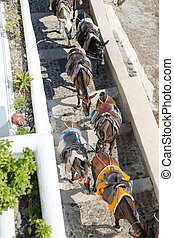 Santorini Donkey Ride - Donkeys at the Greece Santorini...