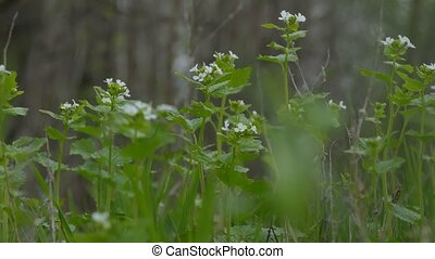 grass green in the landscape forest white flowers nature -...