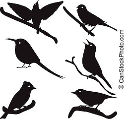 Bird Silhouettes, bird on branch, vector collection