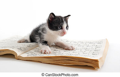 kitten and music book - young black and white kitten and...