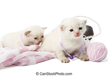 Cute white kittens with yarn woolen balls isolated - White...