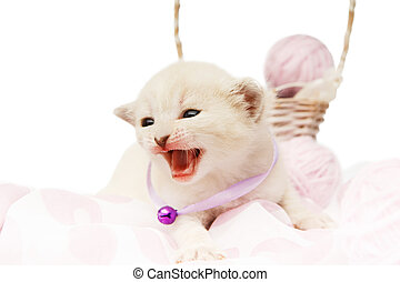 Cute white kitten with yarn woolen balls isolated - White...