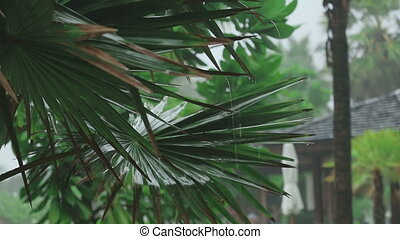 Palm at tropical downpour - Close up of palm leaves in...