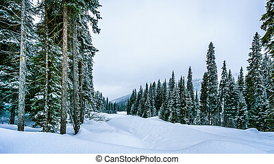 Deep Snow Pack in Mountain Forest - Deep Snow Pack in the...