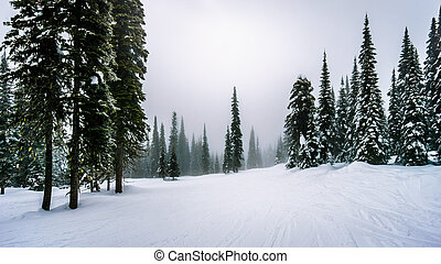 Ski Slopes through the Forest