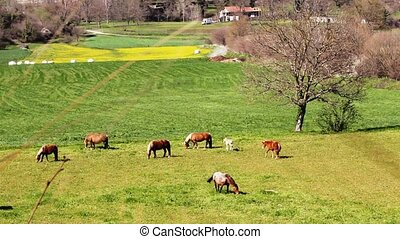 Green meadow with several horses