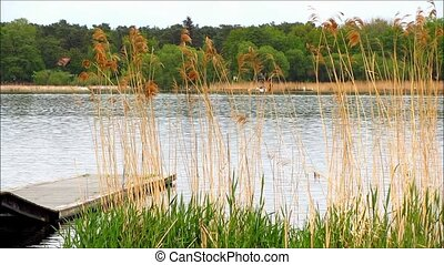 Wooden jetty in lake with grass and reed in the foreground...