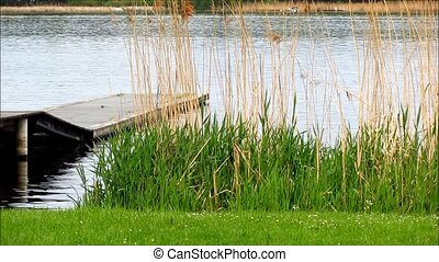 Wooden jetty. Lake with grass reed. - Wooden jetty in lake...