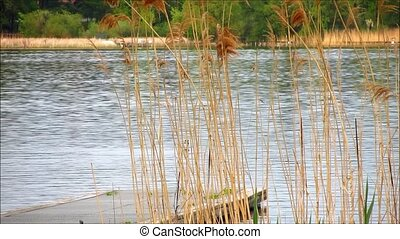 Top of wooden jetty in lake with grass and reed in the...