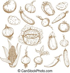 Retro sketches of autumn harvest vegetables - Autumn harvest...