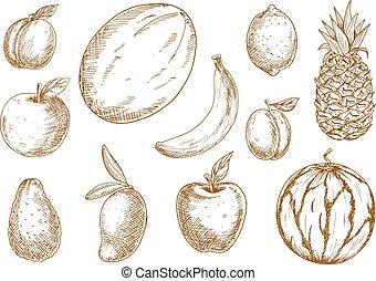 Organically grown tropical, garden fruits sketches -...