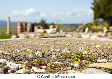 st Johns Basilica - Small flowers growing in the ruins of...